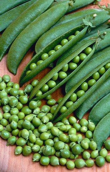 Zelenina na zahradě a péči o ni