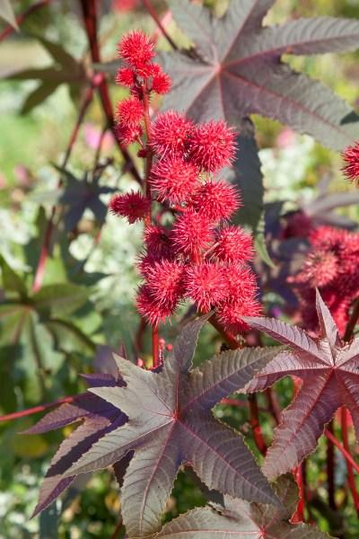 Květy z výsevů