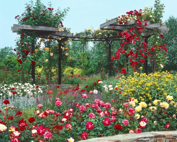 Kombinace růží s jinými trvalkami