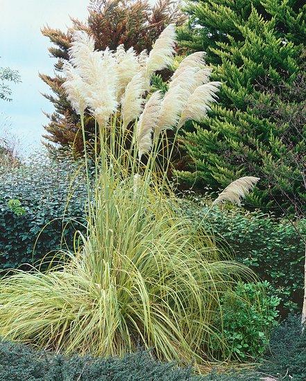 Okrasné trávy - dominanty zahrady