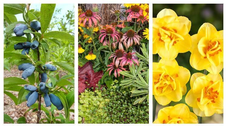 Rostliny pro podzimní výsadbu