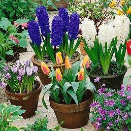 Krokusy a hyacinty