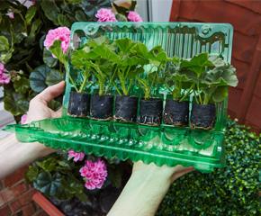 Přepravný obal s mladými rostlinami v sadbovačích