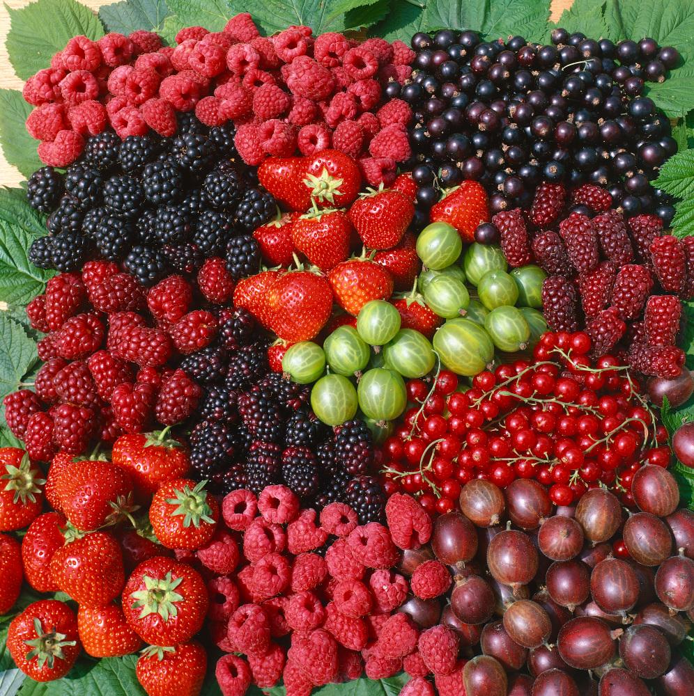 Drobné ovoce v zahradě