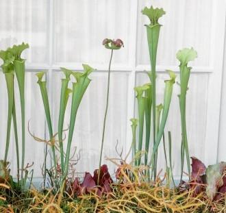 Hmyzožravé rostliny návod