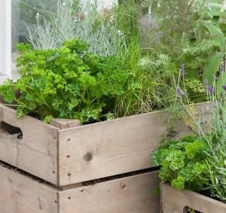 Co s rostlinami po vybalení