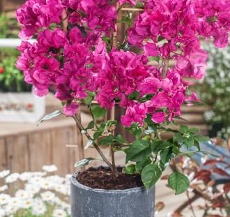 Rostliny v nádobách návod